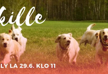 Kamukävely, porukkalenkki koirille la 29.6. klo 11
