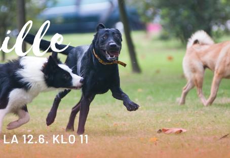 Kamukävely, porukkalenkki koirille lauantaina 12.6. klo 11