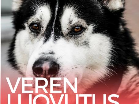 Kamu etsii koiria verenluovutukseen