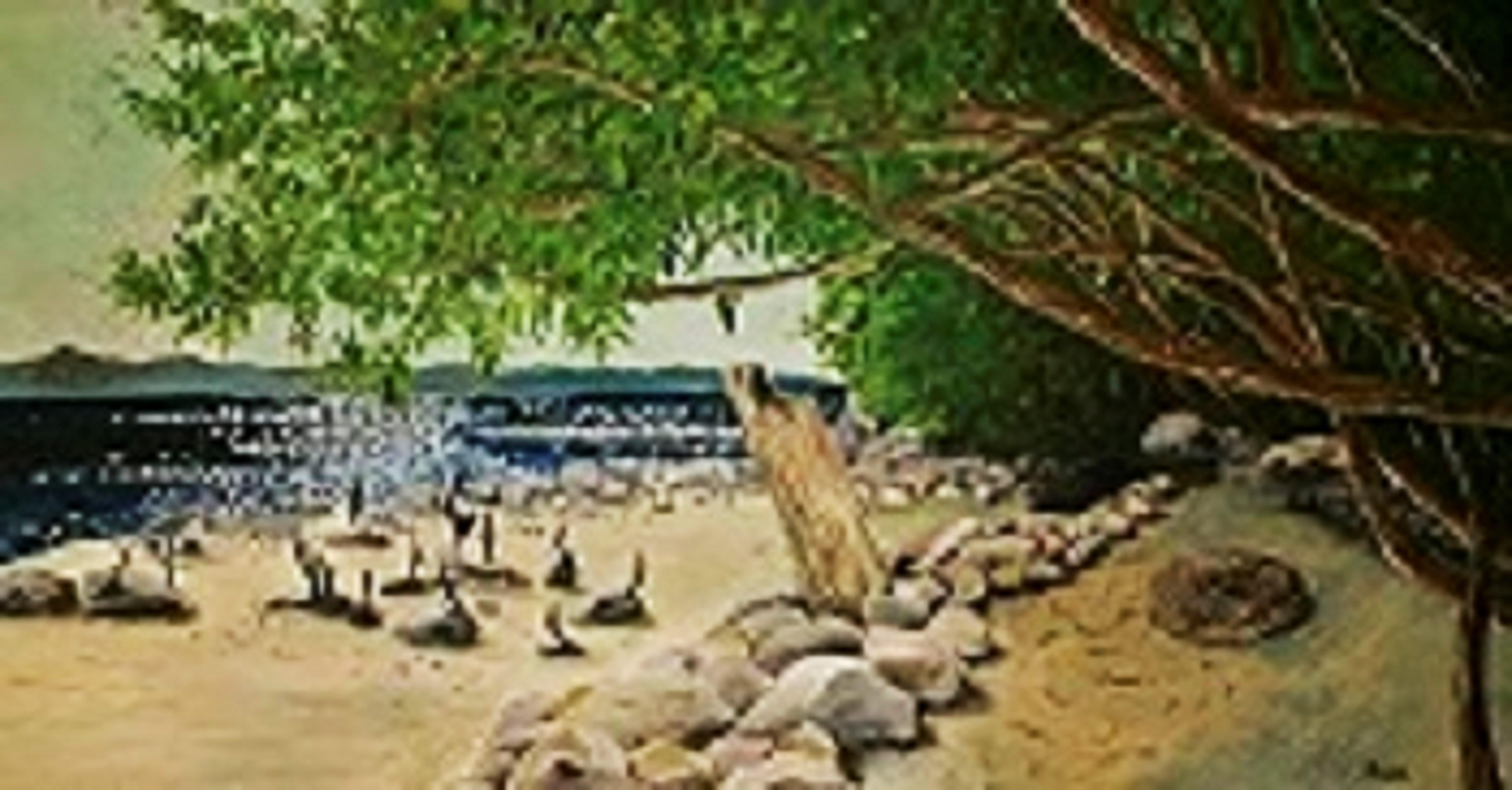 Wreck Beach Holidecks