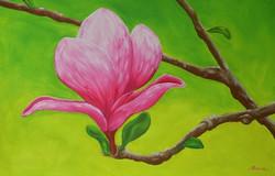 Magnolia Darling