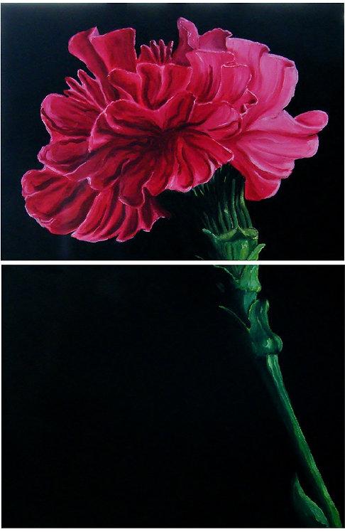 Split carnation