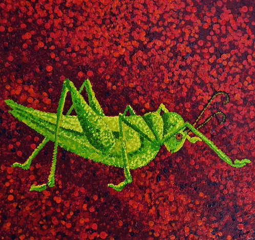 Lime cricket