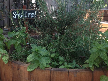 Some of our favourite sensory plants for kids