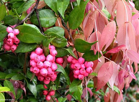 Bush Tucker plants - part 1