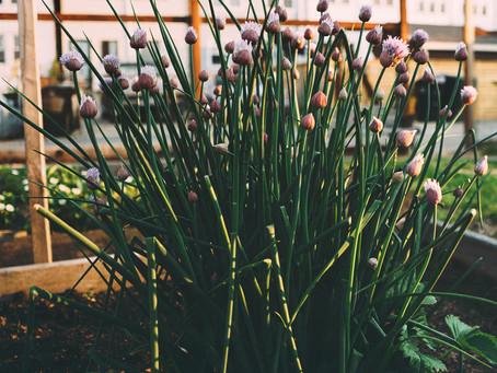 Edible Cafe Gardens - more than a token parsley.