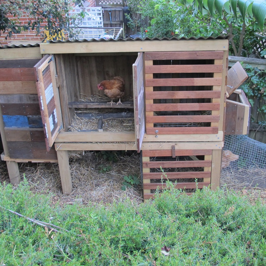 Cherrybrook chickens in the garden