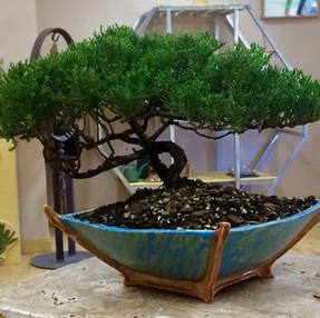 bonsai tree 2.jpg