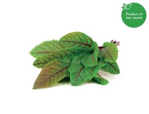 Indoor Herb Garden Kit & Refills / Click & Grow