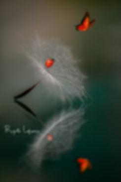 Le papillon et la coccinelle.jpg