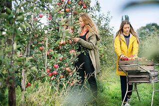 Filles, cueillette, pommes