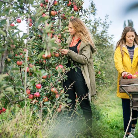 Mécanisation en arboriculture : rester rentable malgré les investissements
