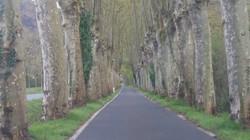 サール村に向かう道 On the way to Sare
