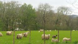 バスク地方の田園風景 French Basque country