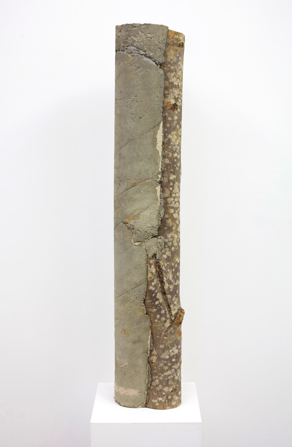 log concrete 2.1.jpg