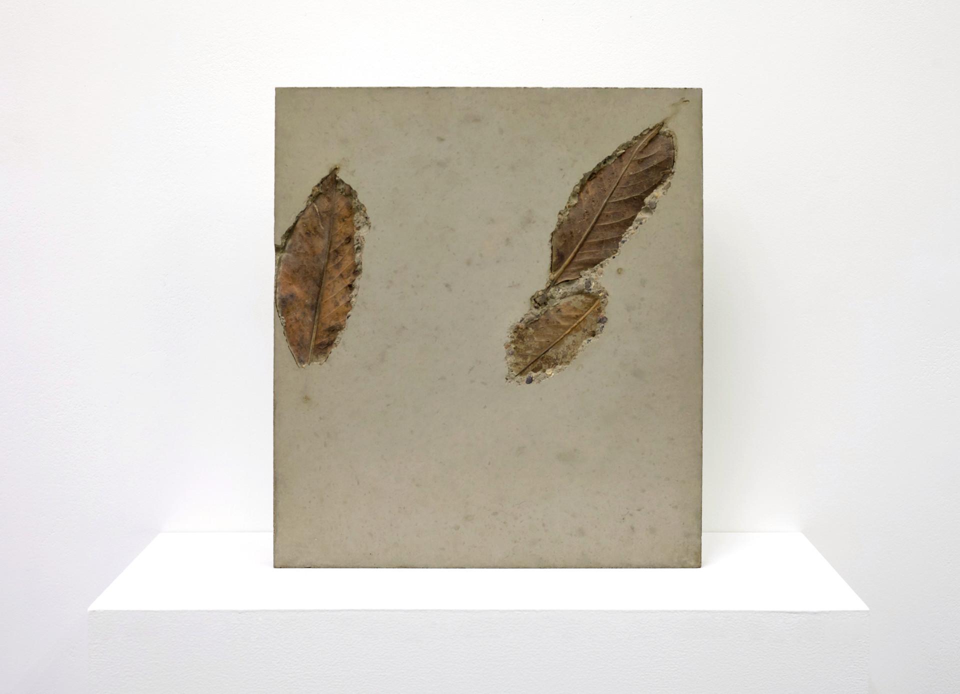 concrete leaf 2.1.jpg
