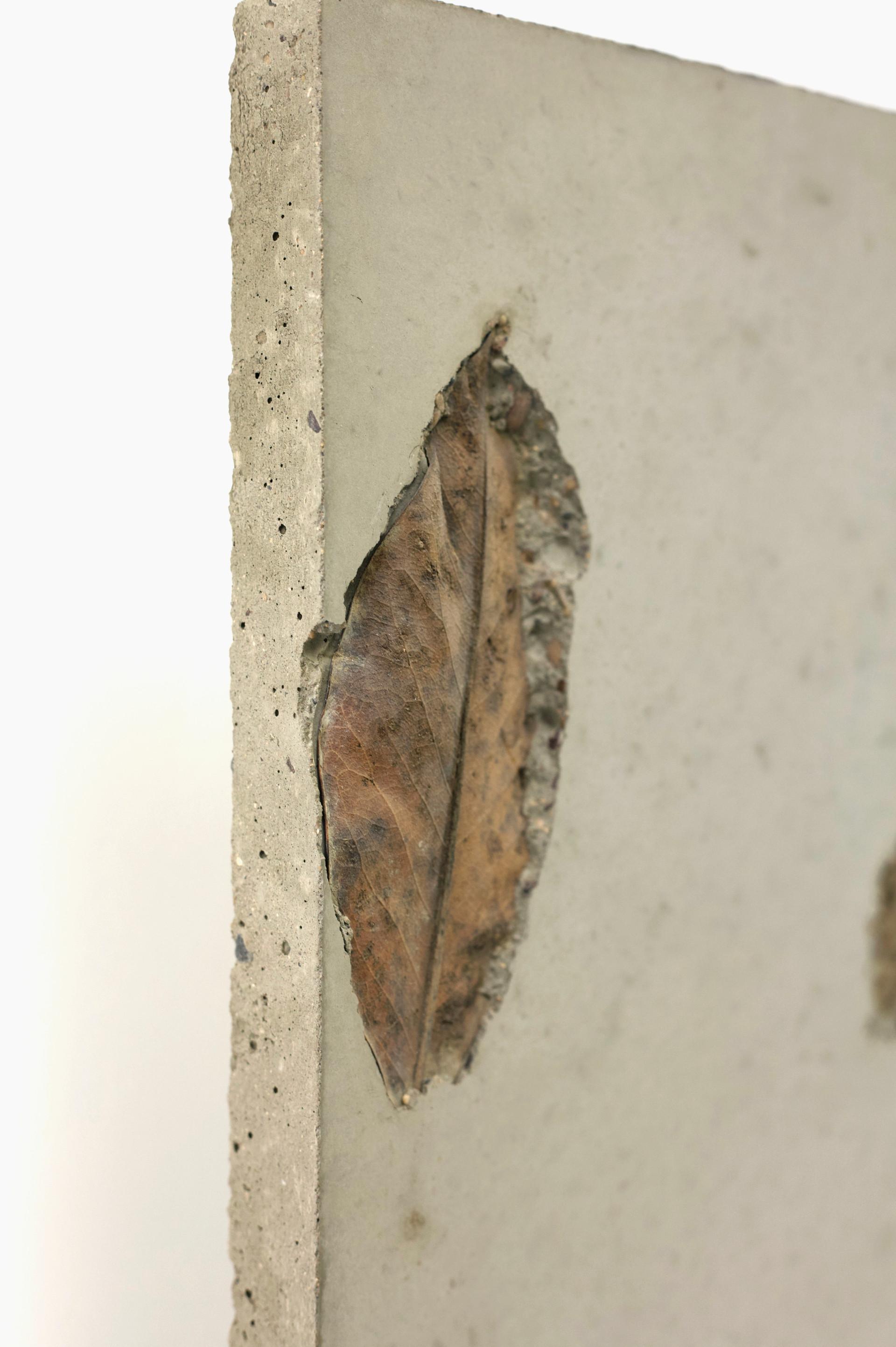 concrete leaf 2.2.jpg