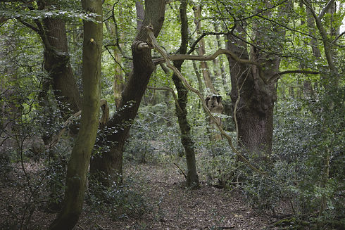 epping forest 2.jpg