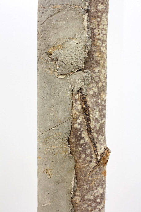 log concrete 2.2.jpg