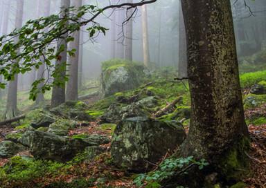 Wald Wandern Forest Hiking