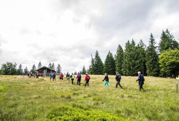 Wandern Hiking Walking Hochzell Bodenmais Bayern Bavaria Bayerischer Wald Retreat