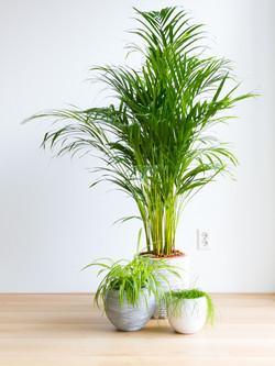 12 Air Purifying House Plants (safe for cats)