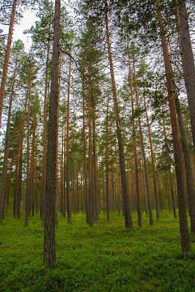 Norwegen - Hallingskarvet Nationalpark