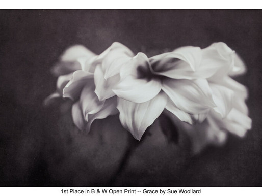 """Photography Competition - January 2020 """"Black and White"""""""