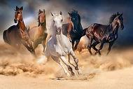 horse-herd-run-desert-sand-storm-against