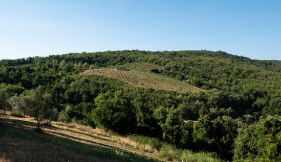Vinfälten