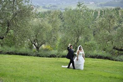 Lummig natur med olivträd oc