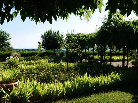Lummig trädgård