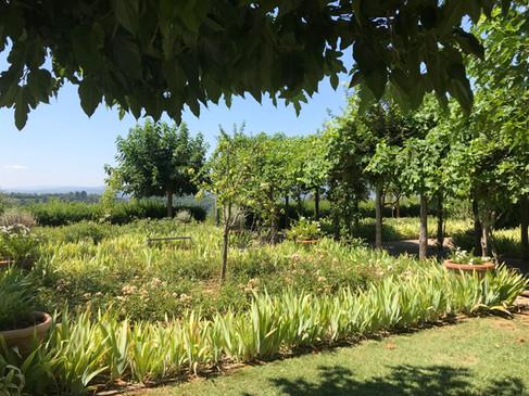 Grön trädgård