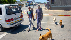 Two boys with four dogs.