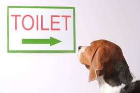 How to Potty Train- Again?