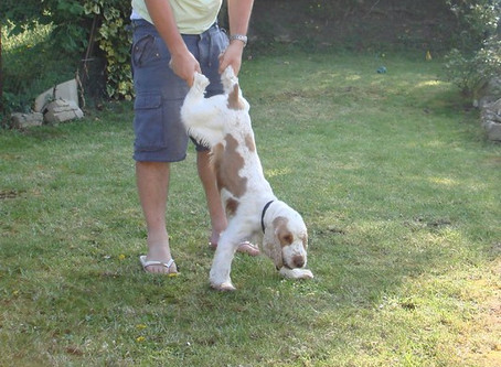 What to do if There is a Dog Fight