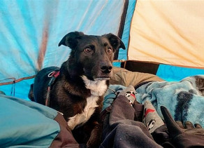 Preparing to Camp With Your Dog