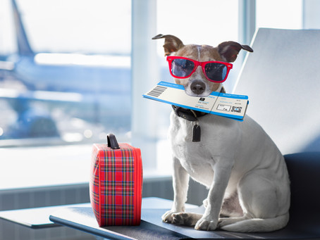 How to Travel with Your Dog on Airlines