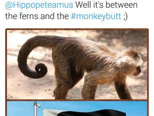 #monkeybutt - The NZ Flag Debate