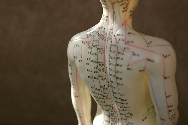 Acupuncture Dummy