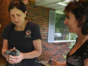 The Phoenix Wildlife Center Makes Front Page News with the Baltimore Sun