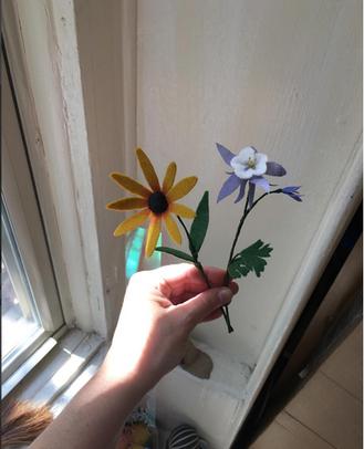 Maryland Colorado State Flowers