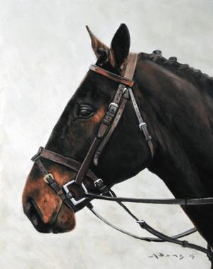 Horse Head Study