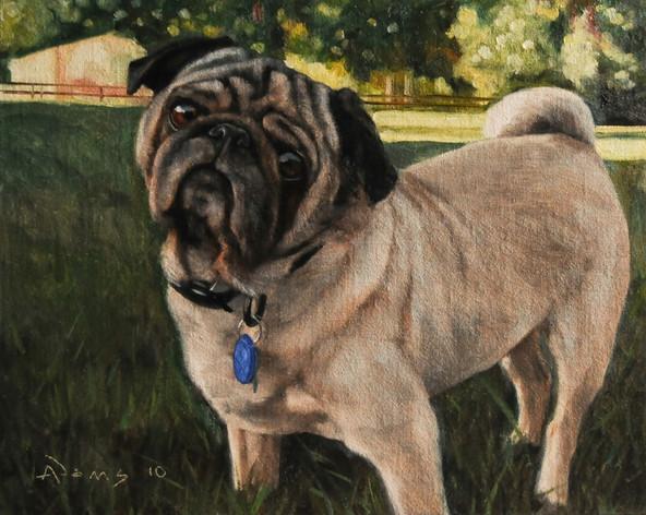 Roscoe the Pug