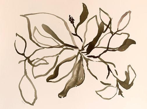 """""""Magnolia Leaves"""""""