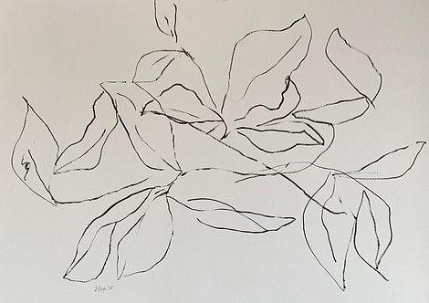 """""""Magnolia Lines"""""""