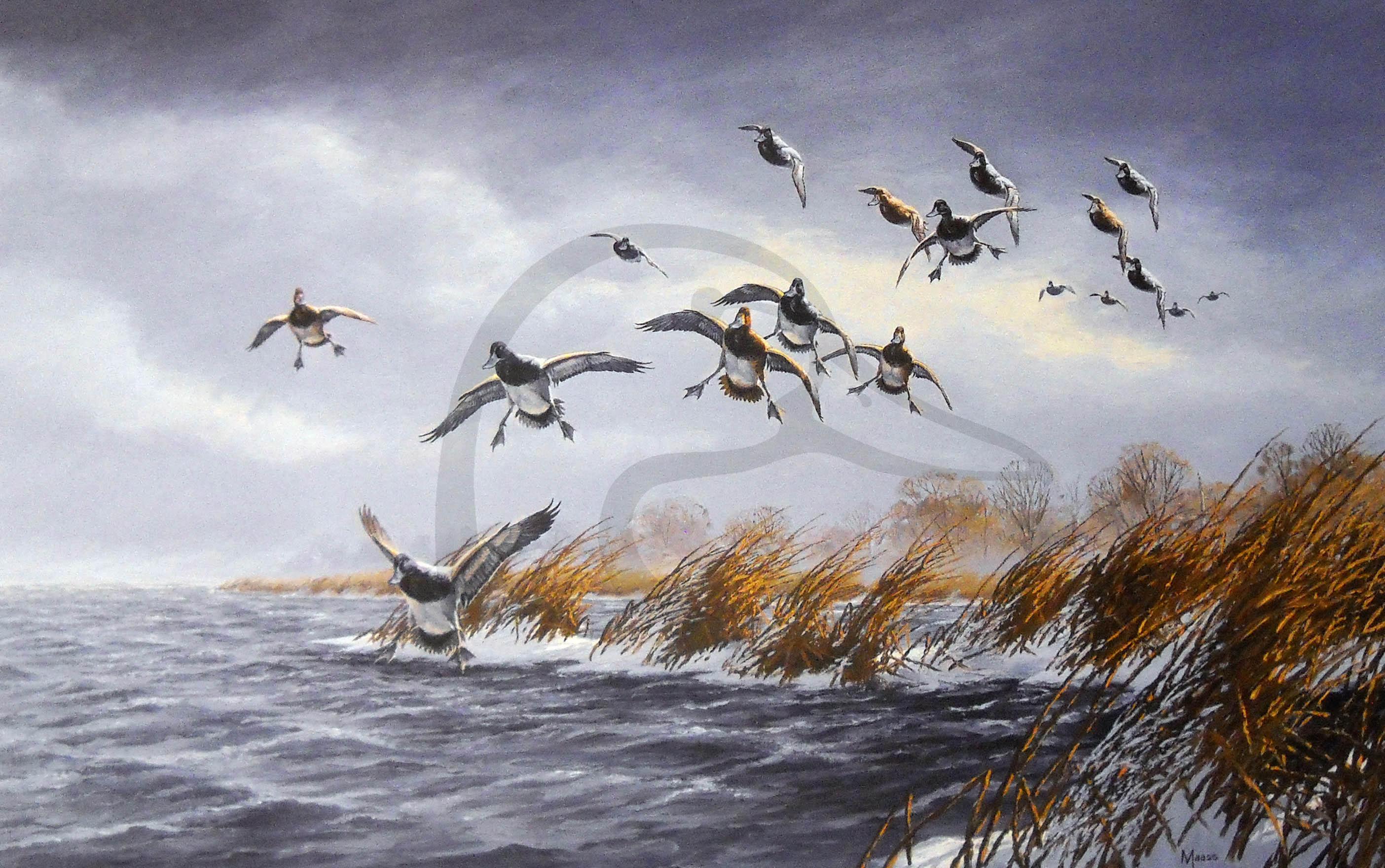 Windy Point Bluebills