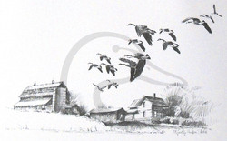 Study for Migrating Honkers