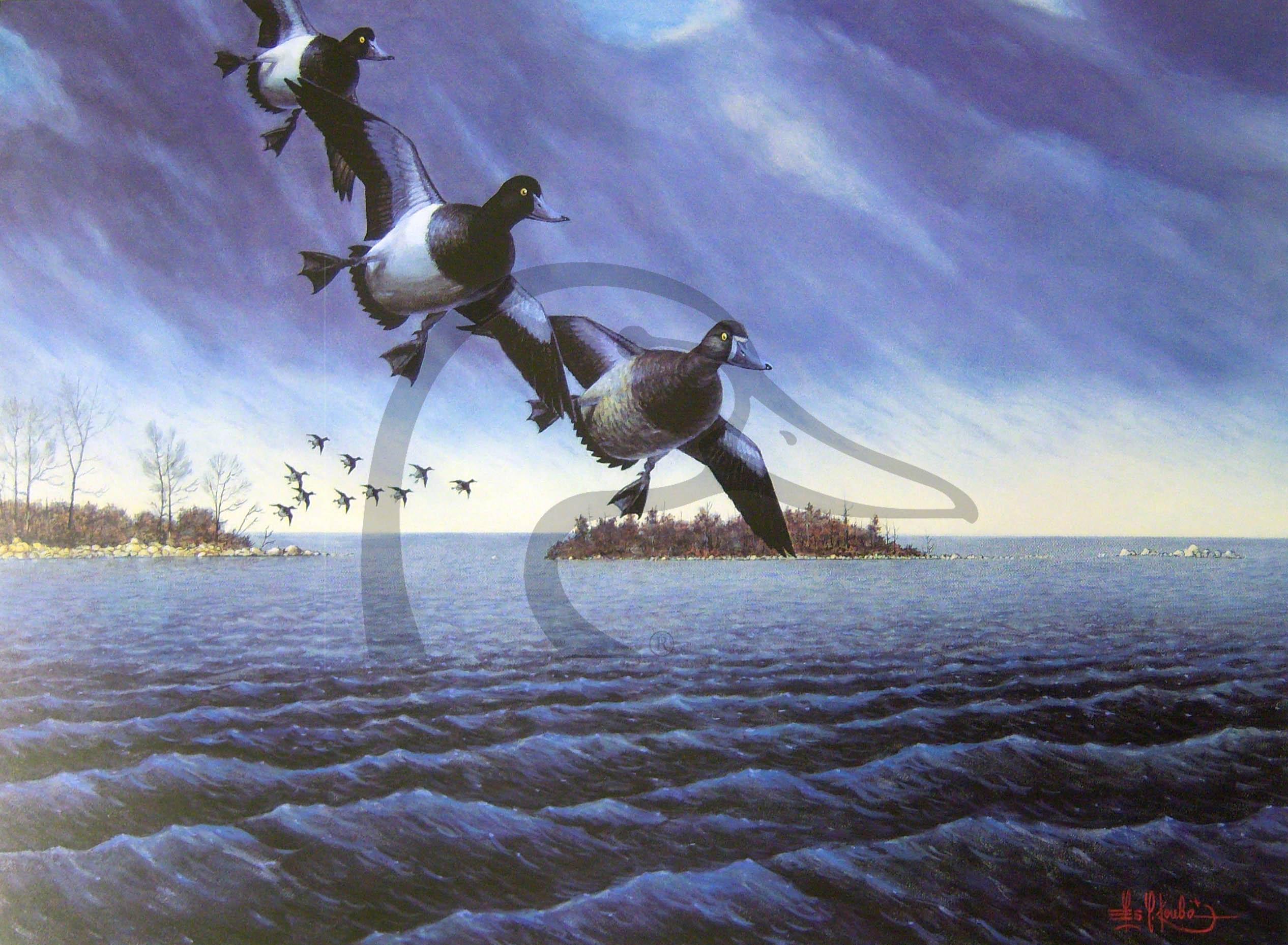 Bluebills Visit Indian Point
