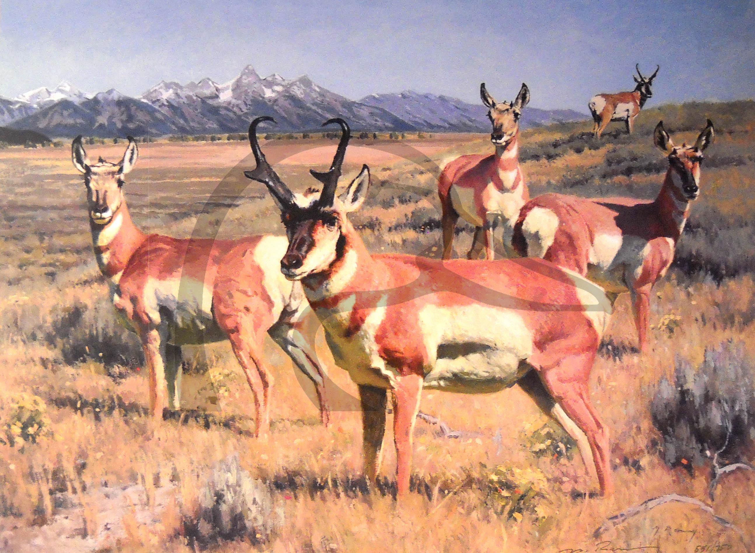 Antelope Flats Rivals